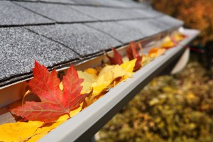 Leaves-in-Gutters1